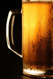 The cold beer Stock Images