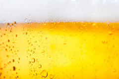 Cold beer. Fresh pils beer with froth and condensed water pearls Stock Images