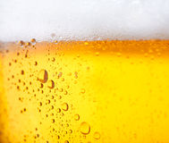 Cold beer. Fresh  beer with froth and condensed water pearls Royalty Free Stock Photos