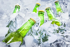 Cold beer bottles on ice royalty free stock images