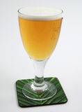 Cold beer in glass. Cold beer on coaster on white with clipping path Royalty Free Stock Photography