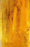 Cold beer in glass Stock Image
