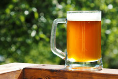 Cold Beer Mug In Sunny Summer Day Royalty Free Stock Image