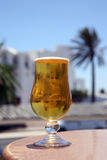 Cold Beer with reflection palm Royalty Free Stock Images