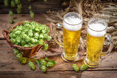 Cold beer surrounded by hops cones Stock Photography