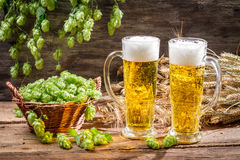 Cold beer surrounded by hops cones Stock Photos