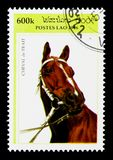 Cold-blooded Horse (Equus ferus caballus), Draft horses serie, c. MOSCOW, RUSSIA - NOVEMBER 26, 2017: A stamp printed in Lao People's Democratic Republic shows royalty free stock images