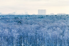 Cold blue dawn over city park in winter Royalty Free Stock Photo