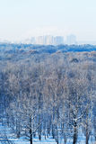 Cold blue morning over city park in winter Royalty Free Stock Images