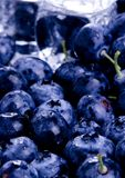 Cold blueberries. Blueberries are a group of flowering plants in the genus Vaccinium, sect. Cyanococcus. The species are native to North America and eastern Asia Royalty Free Stock Photos