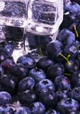 Cold blueberries. Blueberries are a group of flowering plants in the genus Vaccinium, sect. Cyanococcus. The species are native to North America and eastern Asia Stock Images