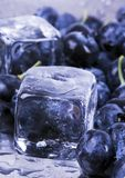 Cold blueberries Stock Images