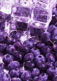 Cold blueberries. Blueberries are a group of flowering plants in the genus Vaccinium, sect. Cyanococcus. The species are native to North America and eastern Asia Royalty Free Stock Images