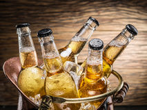 Cold bottles of beer in the brazen bucket. Cold bottles of beer in the brazen bucket on the wooden table Royalty Free Stock Photography