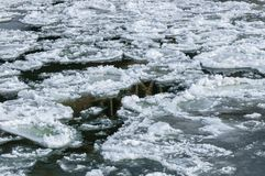 Cold chilly ice on the water. Cold chilly ice flowing on the water Royalty Free Stock Images