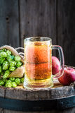Cold cider beer with apples, wheat and hops Royalty Free Stock Images