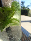Cold coctail with mint Royalty Free Stock Images