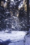 Cold, Conifer, Day Royalty Free Stock Image