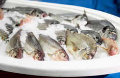 Cold container with seabass and dorado Royalty Free Stock Photography