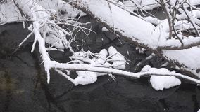 Cold creek spring, the shore covered with snow and ice, fallen trees in the water, the snow falls in the forest. Cold creek spring, the shore covered with snow stock video footage