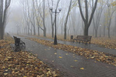 Cold, damp and foggy morning in November, in the boulevard. In Kharkiv stock images