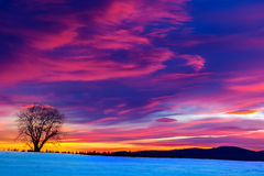 Cold dawn 2 Stock Photography