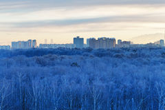 Cold dawn over blue frozen city park in winter Royalty Free Stock Photo