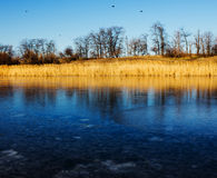 Cold day and first ice on lake. Royalty Free Stock Images