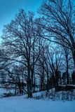 Trees with no leaves by the water during twilight royalty free stock photography