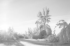 Cold day in the snowy winter forest Royalty Free Stock Photos