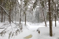 Cold day in snowy winter forest Royalty Free Stock Images