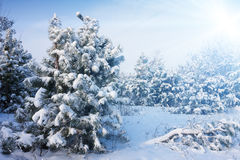 Cold day in the snowy winter forest Royalty Free Stock Images