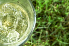 Cold drink. On the grass copy space Stock Photography