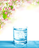 Cold drink and spring flowers. Sparkling water Stock Photos