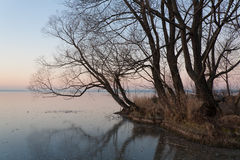 Cold evening. On the bank of the frozen lake Royalty Free Stock Photos
