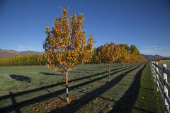 Cold fall mourning mountain valley alfalfa field autumn trees Stock Photo