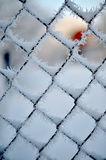 Cold on the fence Royalty Free Stock Photos