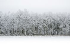 Cold, Fog, Forest Stock Photos