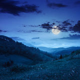 Cold fog on forest  in mountains at night Royalty Free Stock Photos