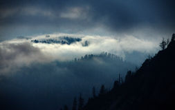 Cold Fog in the High Sierras of California Stock Photo