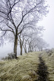 Cold fog morning with trees and a trail Royalty Free Stock Photo