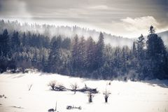 Cold and Foggy Forest in Winter royalty free stock photo
