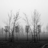 Cold foggy morning - shadow trees Stock Images