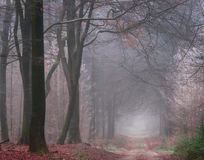 A cold foggy morning in the woods royalty free stock image