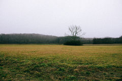 Cold Foggy Winter Field Royalty Free Stock Images