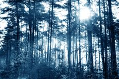 Cold Forest Stock Photography