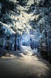 Cold forest. A winter landscape which consists of a path in a spruce forest, where the shaded parts of the forests have a blue, cold-feeling color Royalty Free Stock Photo