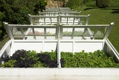 Cold Frames. Traditional Old Cold Frames For Protection Of Young Plants From Frost Stock Image
