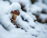 Cold, Freezing, Frost Stock Images