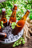 Cold and fresh beer in bowl with ice Royalty Free Stock Photos